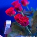 flowers_party_2014_08